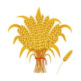 Wheat ears of corn, a sheaf of wheat Royalty Free Stock Photos