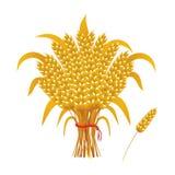 Wheat ears of corn, a sheaf of wheat. Vector golden sheaf of wheat, ear of wheat Royalty Free Stock Photos
