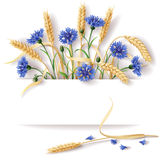 Wheat ears and cornflowers Stock Photos