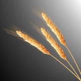 Wheat ears . EPS 10 Stock Image