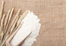 Wheat ears and flour. In wooden scoop on burlap background with copy space Royalty Free Stock Photos