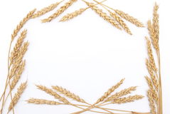 Wheat ears frame Stock Images