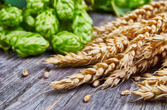Wheat ears and fresh hops Stock Photography