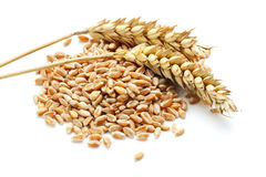 Wheat ears and grain. Two wheat ears on a heap of grain, white background royalty free stock photography
