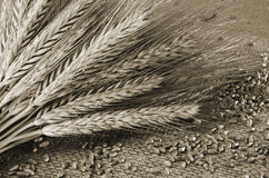 Wheat ears and grains Stock Photography