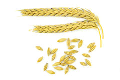 Wheat ears and grains. Isolated on white background Stock Images