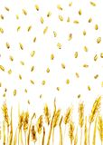 Wheat ears and grains. Watercolor, seamless texture for background Stock Image