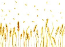 Wheat ears and grains. Watercolor, seamless texture for background Royalty Free Stock Image