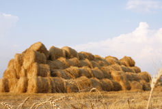 Wheat ears and haystack. Wheat ears against a background a haystack stock image