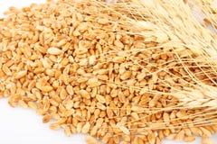 Wheat ears hill Stock Photos
