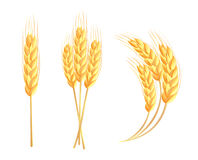 Wheat ears icons Royalty Free Stock Image