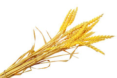 Wheat ears ilie.  Isolated on white background.  Royalty Free Stock Images