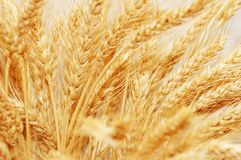 Wheat ears isolated. On the white background Stock Photos