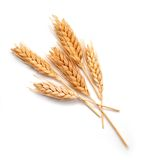Wheat ears isolated Stock Image