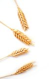 Wheat ears isolated stock images