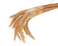 Wheat ears isolated. On white background Royalty Free Stock Images