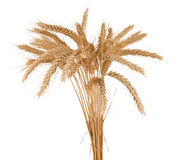 Wheat ears isolated. On white background Stock Photos