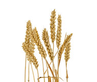 Wheat ears isolated Royalty Free Stock Photography
