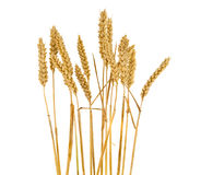 Wheat ears isolated Royalty Free Stock Photo