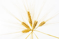 Wheat ears isolated over white Royalty Free Stock Images