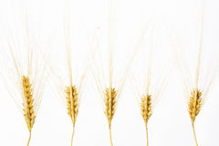 Wheat ears isolated over white Stock Photo