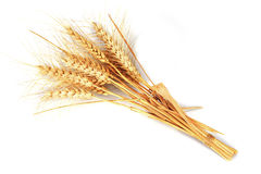 Wheat ears. Isolated over a white background Royalty Free Stock Image