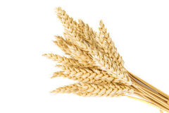 Wheat ears. Isolated over a white background Royalty Free Stock Photos