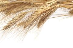 Wheat ears Royalty Free Stock Photo