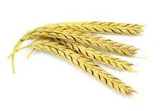 Wheat ears. Isolated on white background Stock Image