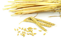 Wheat ears. Isolated on white background Stock Photography