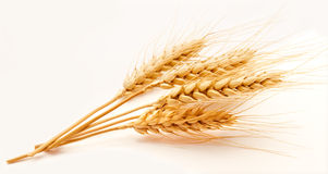 Wheat ears isolated on a white Royalty Free Stock Photos