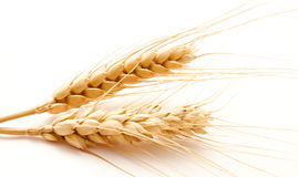 Wheat ears isolated on a white Stock Photos