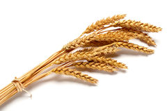 Wheat ears Stock Image