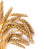 Wheat ears. Isolated on the white background Royalty Free Stock Image