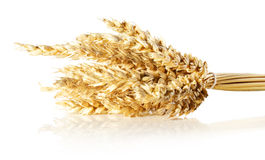 Wheat ears isolated on white background Stock Photos