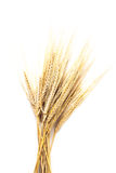 Wheat ears. Isolated on white background Stock Photo