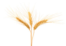 Wheat ears isolated on white Stock Photo