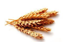 Wheat ears isolated on a white background Stock Photo