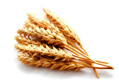 Wheat ears isolated on a white background Stock Images