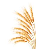 Wheat ears isolated on the white background Stock Photography