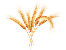 Wheat ears isolated on white background. EPS 10. Vector file included Stock Images