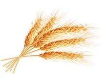 Wheat ears isolated on white background. EPS 10 Stock Image