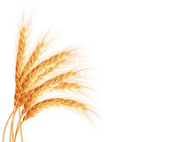 Wheat ears isolated on white background. EPS 10 Stock Photo