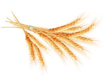 Wheat ears isolated on white background. EPS 10 Stock Photography