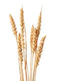 Wheat ears. Isolated on white backgrounds Royalty Free Stock Photography
