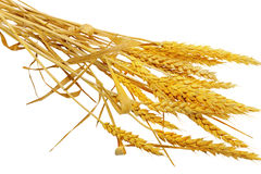 Wheat ears lie.  Isolated on white background Royalty Free Stock Photos