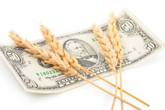 Wheat ears and money Stock Images