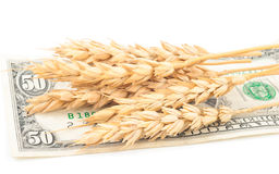 Wheat ears and money Stock Image
