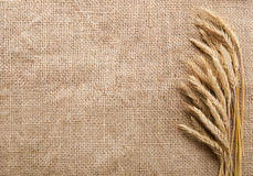 Wheat ears over burlap background Royalty Free Stock Photography