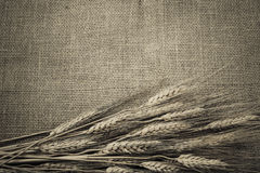 Wheat Ears over Burlap Stock Images